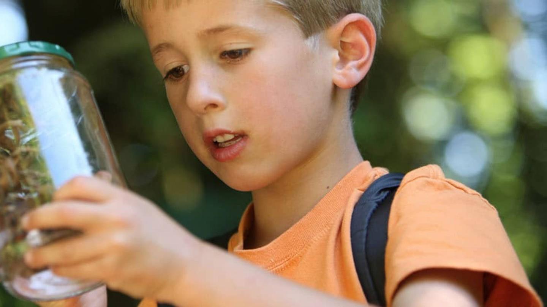 En pojke som tittar på insekter i en glasburk