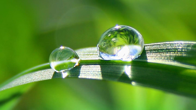 Vattendroppar på ett löv