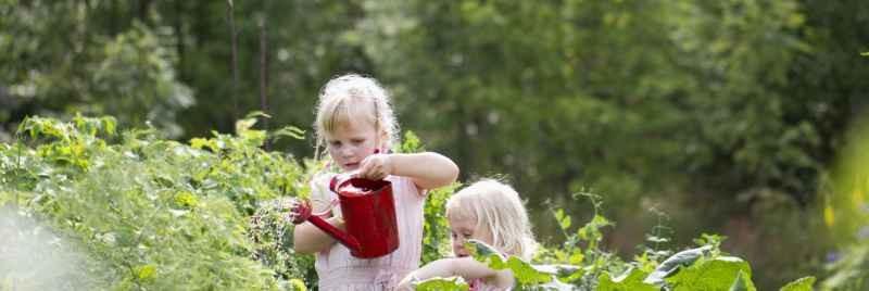 Två flickor i fält som bevattnar växter