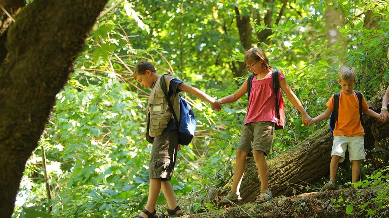 Fyra barn som går hand i hand genom en skog